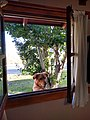 Dog visiting cabin El Chalten Argentina.jpg