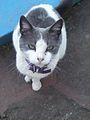 Domesticated stray cat.jpg