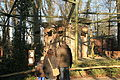 Dortmund - Zoo 18 ies.jpg