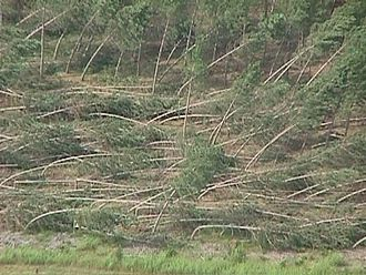 Microburst - Tree damage from a downburst
