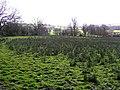 Drummuray Townland, Ballinamallard - geograph.org.uk - 365451.jpg