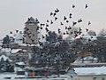 Dunaföldvár 2012-02-13, madárraj a hídról nézve - panoramio.jpg