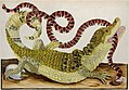 Dwarf Caiman and False Coral Snake from The Insects of Suriname by Maria Sibylla Merian.jpg