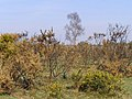 Edge of heathland, Beaulieu Heath, New Forest - geograph.org.uk - 430590.jpg