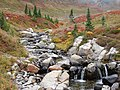 Edith Creek above Myrtle Falls with fall colors. Mid September, 2015. (77b69bc6743b4573900c90ca7a38f52f).JPG