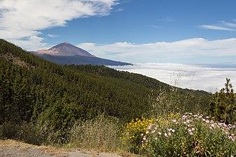 El Teide en primavera.jpg