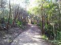 Engadine NSW 2233, Australia - panoramio (167).jpg