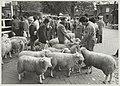 Enige tientallen moslims bij de poort van het slachthuis voor het ritueel slachten van een schaap. NL-HlmNHA 54011495.JPG