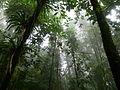 EnvolVert-ForetPrimaire-Colombie-SierraNevadaDeSantaMarta-2011-1.JPG