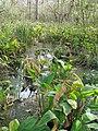 Everglades R05.jpg