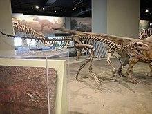 FMNH Herrerasaurus skeleton.jpg