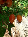 Fale - Giardini Botanici Hanbury in Ventimiglia - 358.jpg