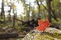 Fall 2016- 10-10-16 - 10-14-16 (30300722941).jpg