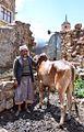 Farmer and Bull, Yemen (16223220936).jpg