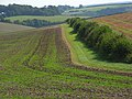 Farmland, Forston - geograph.org.uk - 545475.jpg