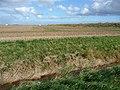 Farmland near Wainfleet (4) - geograph.org.uk - 1532363.jpg