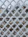 Fence Rime.jpg