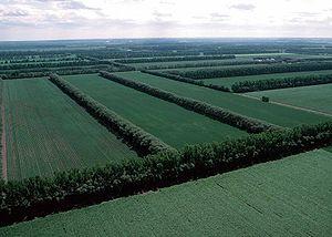 Aerial view of field windbreaks in North Dakota