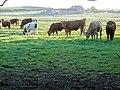 Field before Lower Barn - geograph.org.uk - 422497.jpg