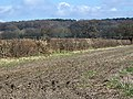 Field boundary near Crow - geograph.org.uk - 1186554.jpg