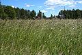 Field in Laukaa 2.jpg