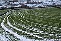 Field near Holdworth - geograph.org.uk - 903803.jpg