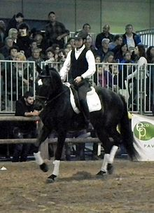 Fieracavalli 2014 - Salernitano.jpg