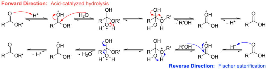 an experiment on fischer esterification of acetic acid using isopentlyl alcohol A mechanism for the acid catalysed reaction to produce esters from organic acids and alcohols the mechanism for the esterification reaction.
