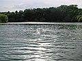 Fishing lake near Kelsey House, Burstwick - geograph.org.uk - 189546.jpg