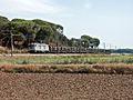 Flickr - nmorao - Madeira, Alcácer, 2008.09.16.jpg