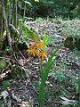 Flora del Eume.JPG