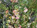 Flora silvestre 2.jpg