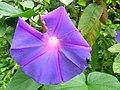 Flores da Chapada 03.jpg