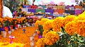 Flores de cempasúchil en la tradición mexicana..JPG