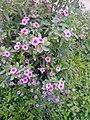 Flower's in Baghdad 6.jpg
