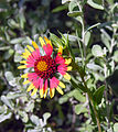 Flower (11662667).jpg