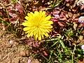 Flower 0002.jpg