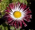 Flower 3 (4611208831).jpg