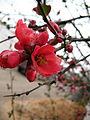 Flower 58 (6993744455).jpg