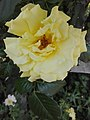 Flower Dortmund 16.jpg