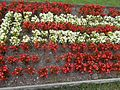 Flower bed, red & white in Gyenesdiás, 2016 Hungary.jpg