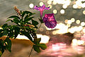 Flower enlightment (10248147776).jpg