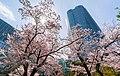 Flower viewing event in Tokyo, Japan; April 2014 (10).jpg