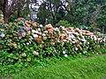 Flowers at Bryant Park Kodaikanal, India.jpg
