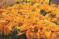Flowers of zucchini in Ventimiglia.jpg