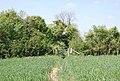 Footpath (bridleway) crossing field - geograph.org.uk - 423580.jpg