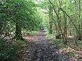 Footpath in Cockney's Wood - geograph.org.uk - 1255961.jpg