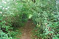 Footpath through Foster's Wood - geograph.org.uk - 1361061.jpg