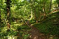 Footpath through the woods in Happy Valley - geograph.org.uk - 1442887.jpg