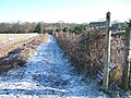 Footpath to Hook Wood - geograph.org.uk - 130928.jpg